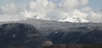 Pinus cembro, la forza vitale dalle montagne.