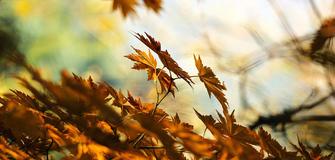 Rateiser Herbstfest mit der Bürgerkapelle Lana im Rafflerhof