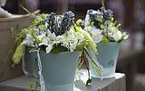 Pflanzen mieten statt kaufen
