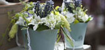 Pflanzen mieten - statt kaufen