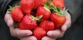 Erdbeeren aus dem Ultental