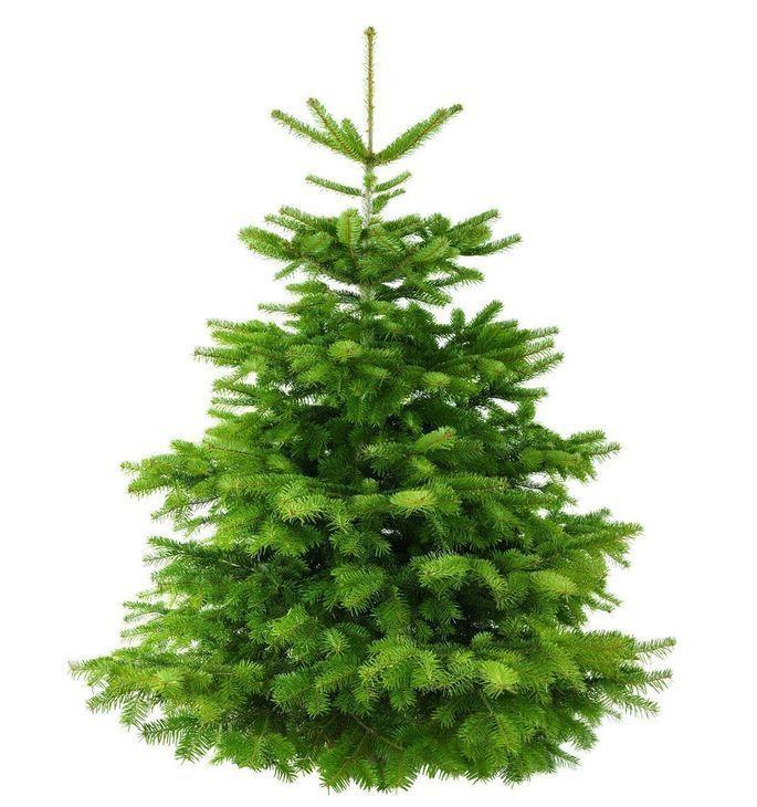 Weihnachtsbaum gesucht?