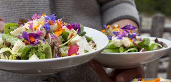 Wildkräuter - kulinarische Wochen vom 27.04 bis 15.05.2016