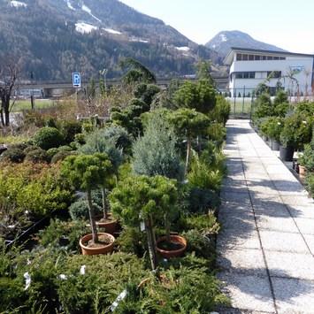 Leo's Gardencenter