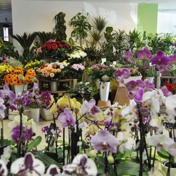 Blumen Florianne
