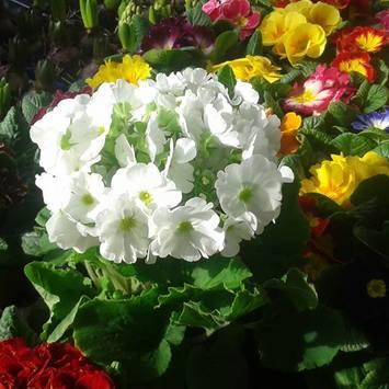 Herbert's Blumenmarkt
