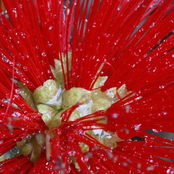 Wielander Floricoltura