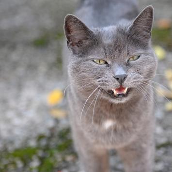 Tiefenschärfe Katzenbild