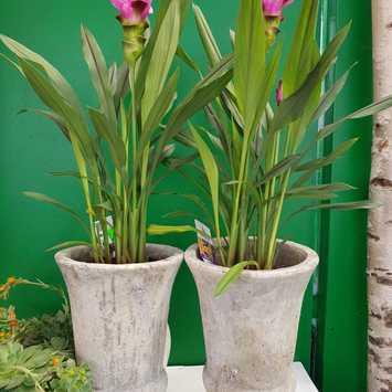 Giardinaggio Wiedemair Blumen Peppo