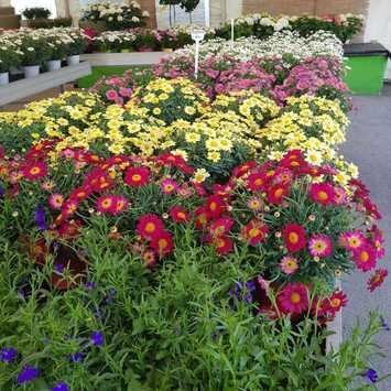 Gärtnerei Wiedemair Blumen Peppo